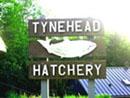 Tynehead Hatchery (16585 96 Ave, Surrey, BC)